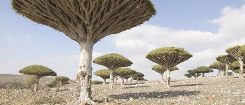 Socotra, uma ilha perdida no tempo
