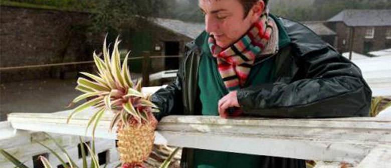 Você pagaria 16 mil dólares por um abacaxi?