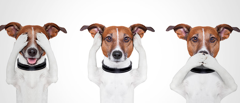 """O que cães estão """"dizendo"""" quando movem o rabo?"""