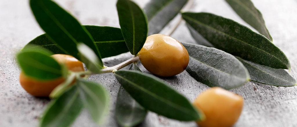O poder do chá de folha de oliveira
