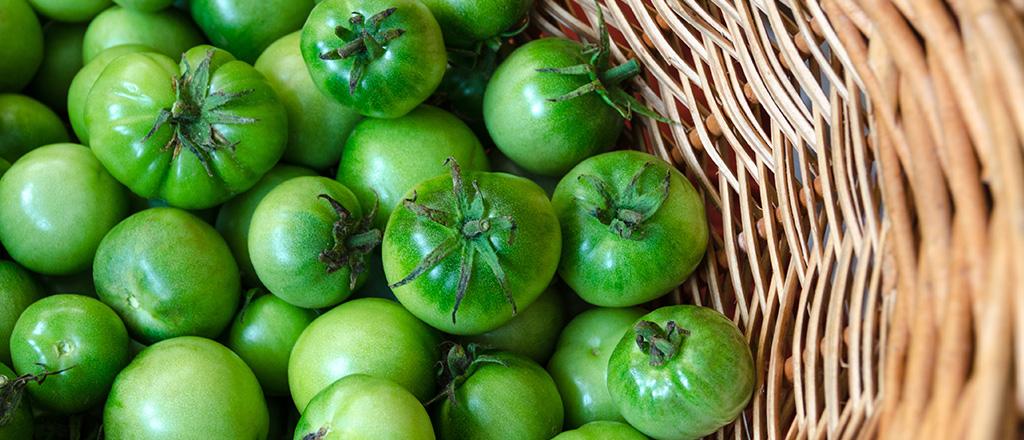 Tomates verdes estão no ponto