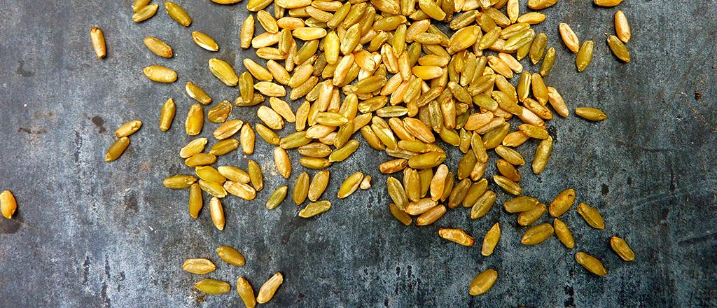 Freekeh, o trigo que emagrece