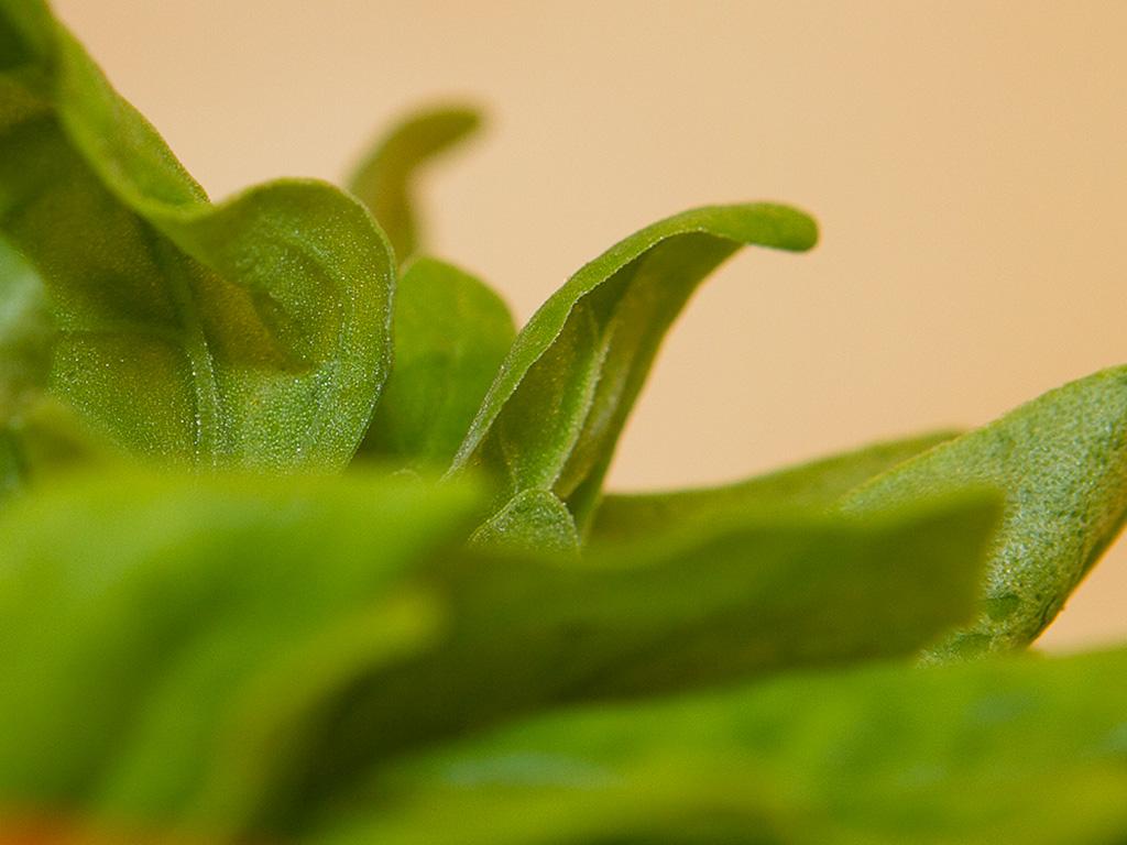 Sopa detox de inhame com espinafre