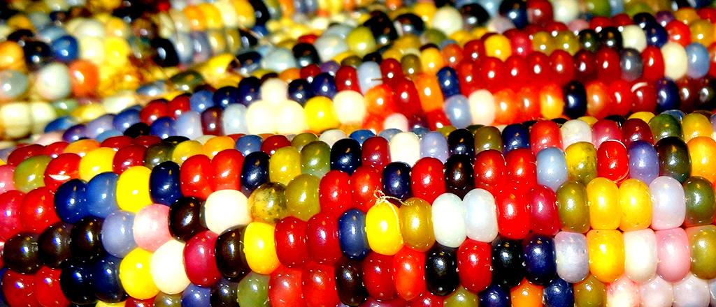 Arco-íris nutritivo