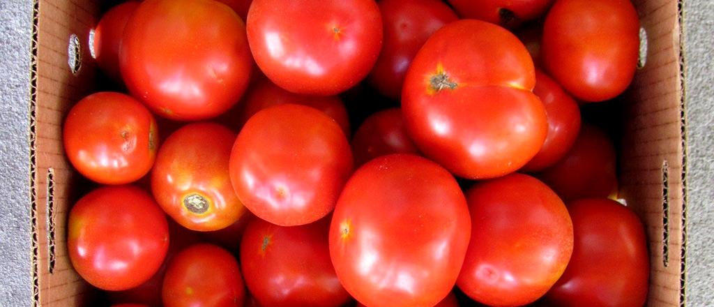 em-busca-do-tomate