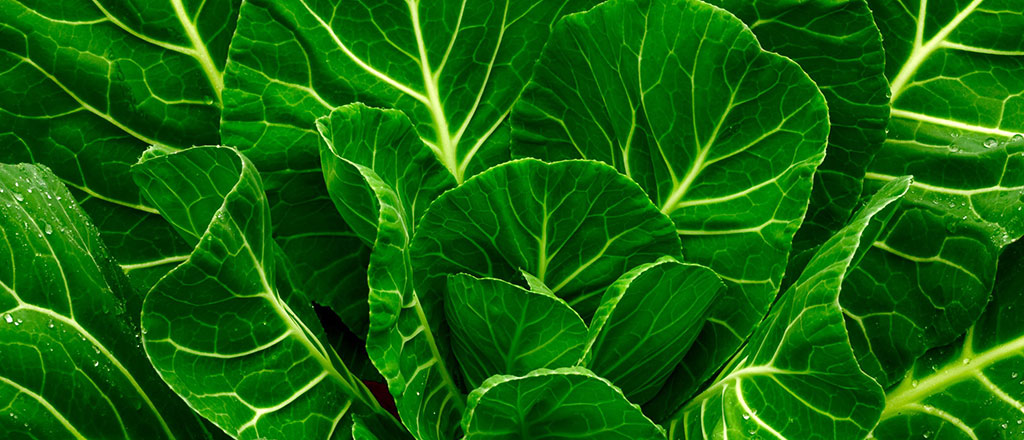 Revelado o poder do cobre contra a gordura