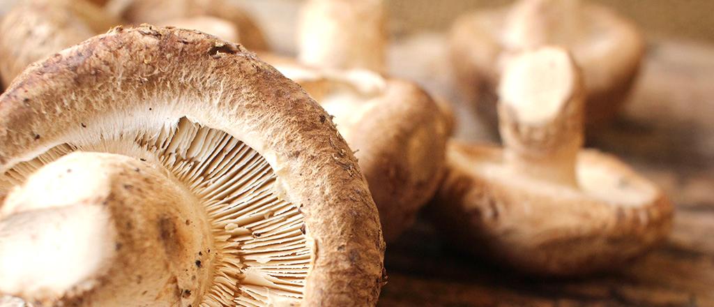 o-jeito-certo-de-cozinhar-cogumelos