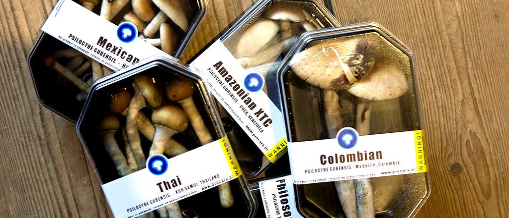 cogumelos-magicos