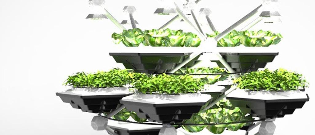 horta-do-futuro