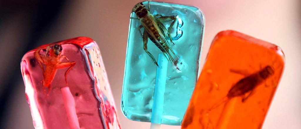 insetos-comestiveis