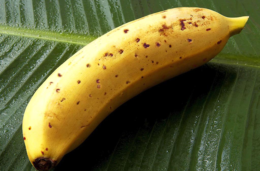 banana-mongee